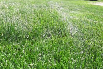 Рулонный газон «ДеЛюкс»
