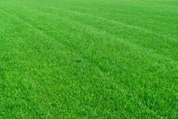 Рулонный газон «Элитный»