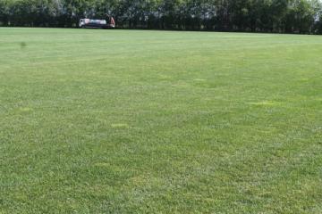Рулонный газон «Оптовик»