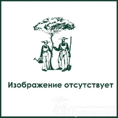Ива «Подарок судьбы» (Salix «Podarok Sudby»)
