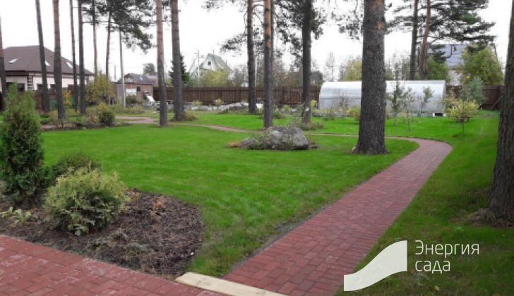 Сеянный газон