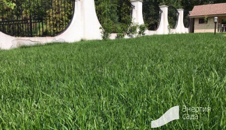 Трава после кормления