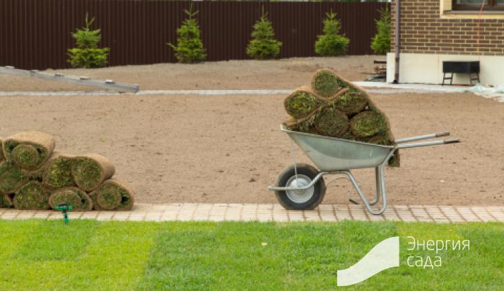 Работы по устройству газона в саду