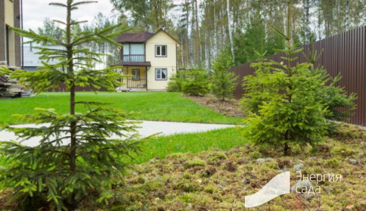 Проектирование лесных зон в ландшафтном дизайне