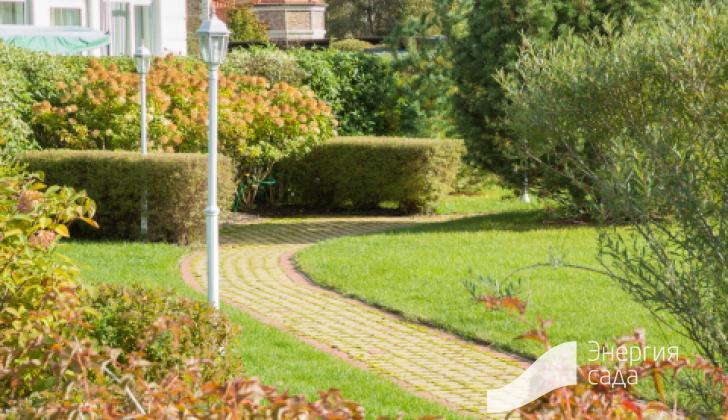 Живые изгороди в ландшафтном дизайне.
